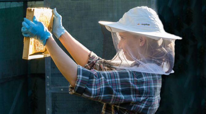 CRC for Honey Bee Products PhD Researcher Jessica Moran inspect a bee hive. Photo Credit: Prem Bates
